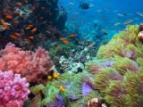 Reefdancer Glass Bottom Boat Tour – 90 minute